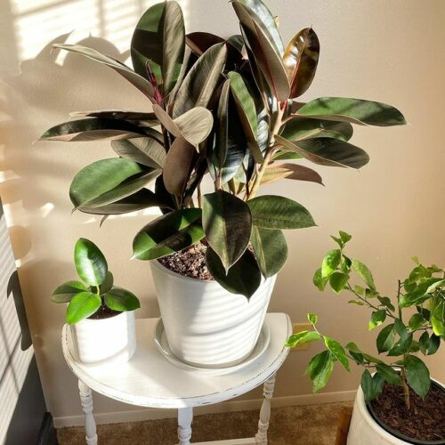 Bloomscape Reviews – Is This Online Plant Store Legit?