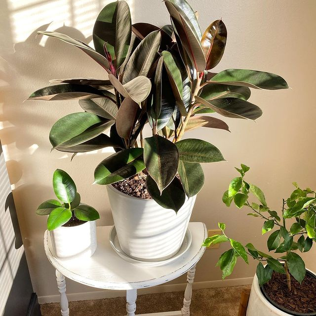 Bloomscape Reviews – Your New Favorite Plant Store?